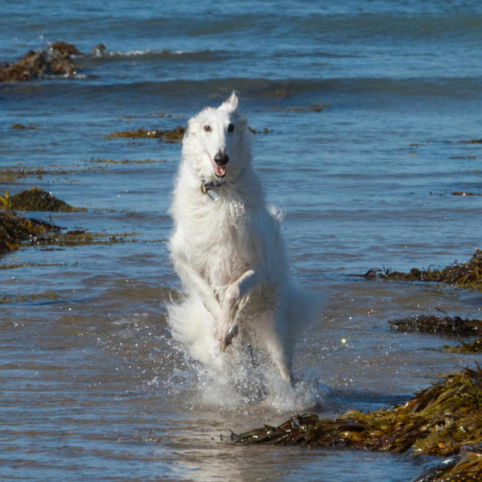BEE_7431NadinaBee Dog Lifestyle Photo Beach